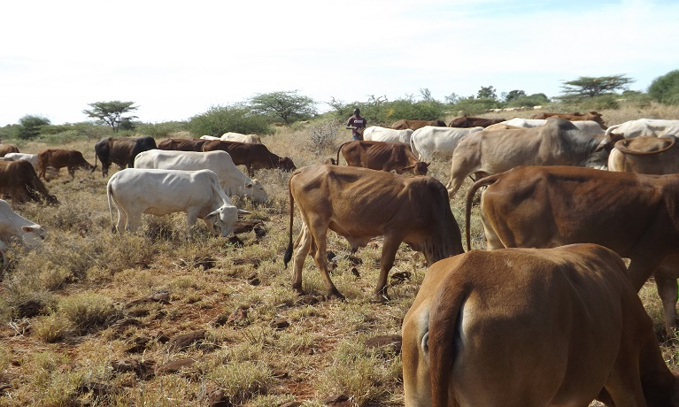 Coventry University-led research to benefit Kenyan small-scale livestock farmers