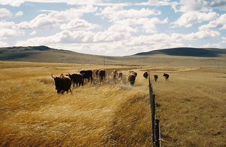 Grazing systems in South Africa