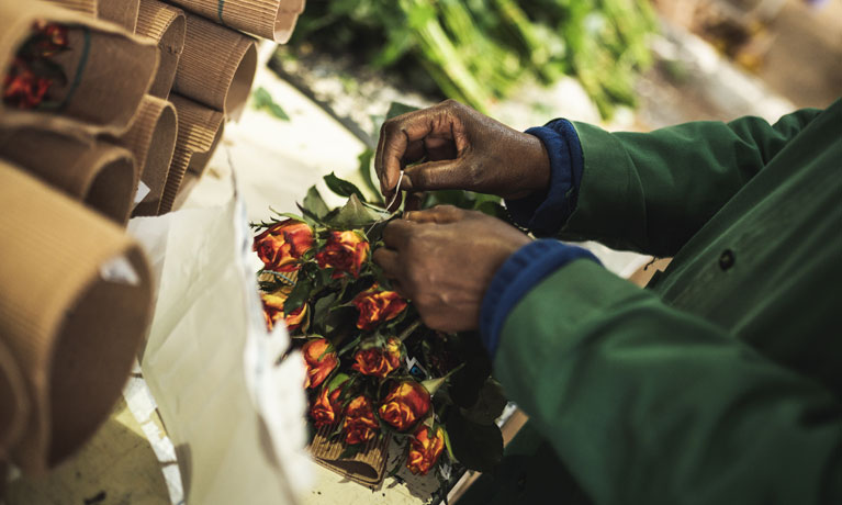 Behind the bouquet: building resilience in the flower supply chains
