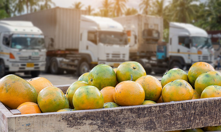 mangos with transport in the background